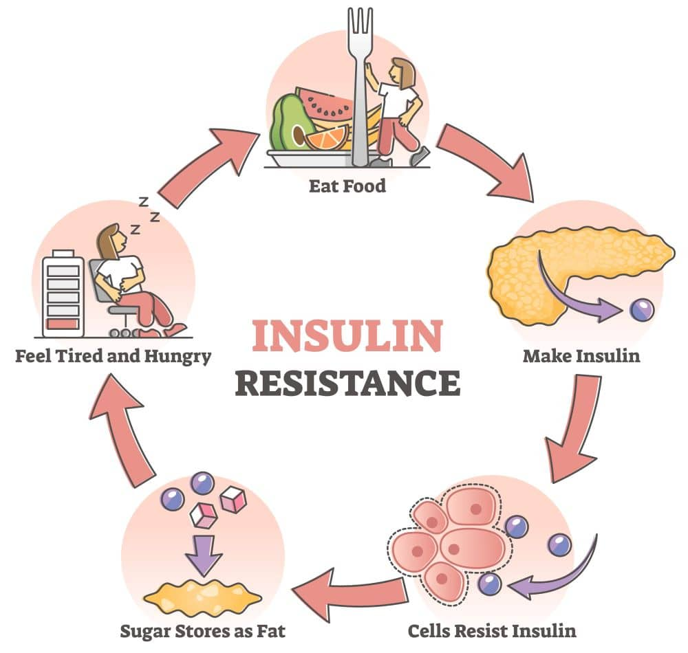 As insulin resistance develops, the body fights back by producing more insulin.